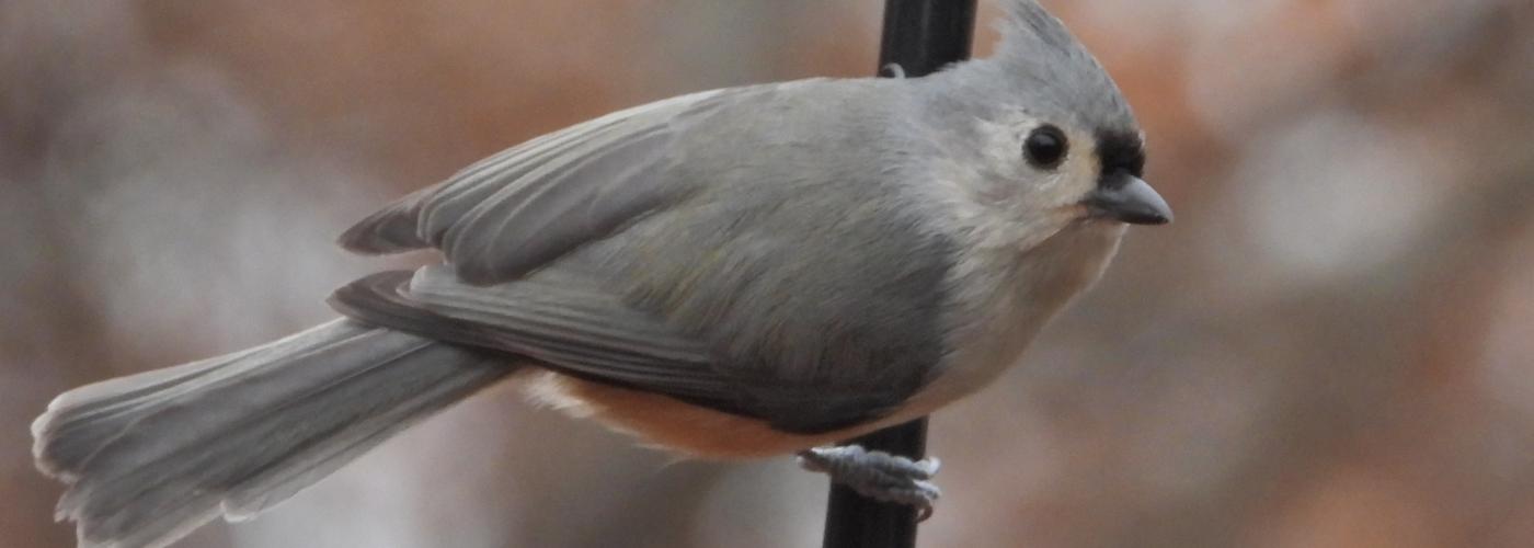 Photo of Bird